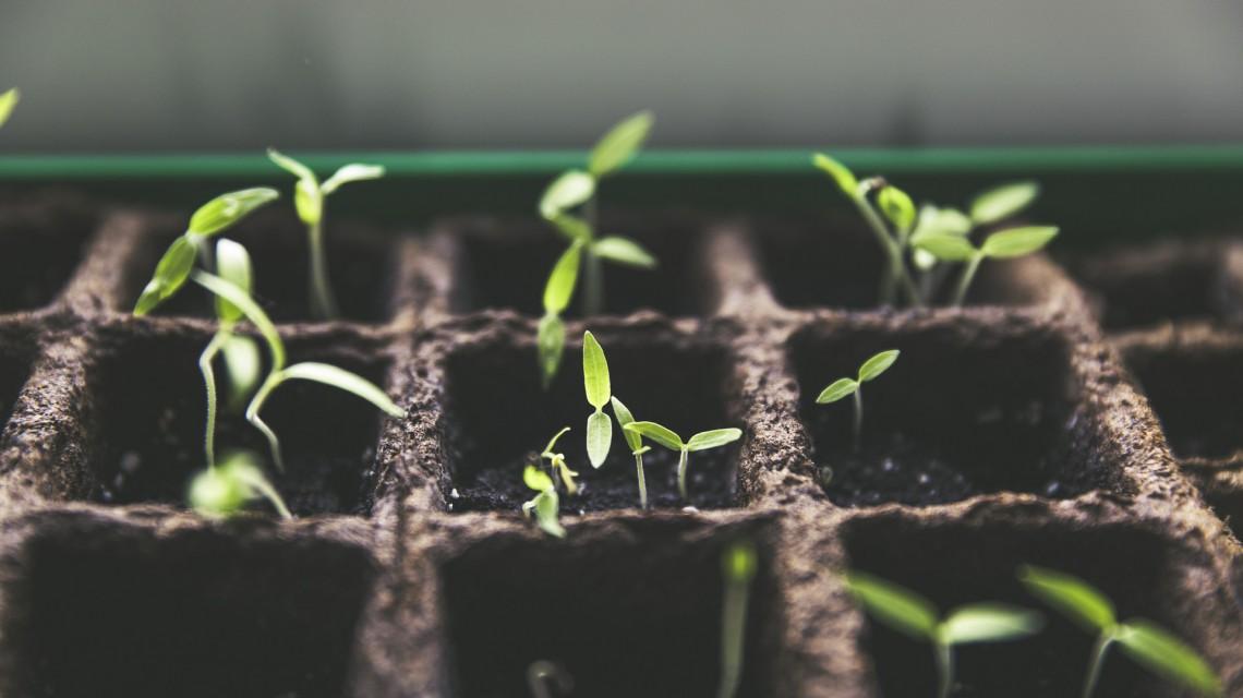 plant-1474807_1920