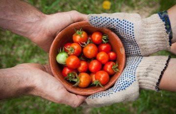 4 Hände umfassen gemeinsam Schale mit Tomaten