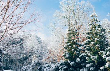 blauer Himmel eingeschneite Tannen und Bäume zum Artikelthema Dezember: Top 10 Events in Berlin