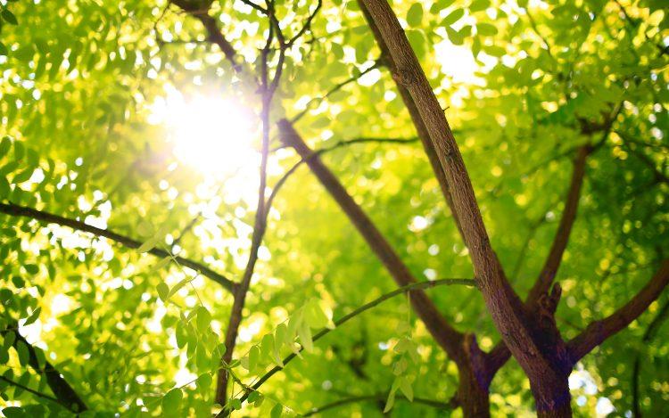 Bäume Äste Grüne Blätter Sonnenstrahlen zum Artikelthema Ich lebe grün! Blog gibt Tipps für einen nachhaltigen Lebensstil